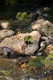 Grande pierre dans le ruisseau de forêt Photographie stock libre de droits