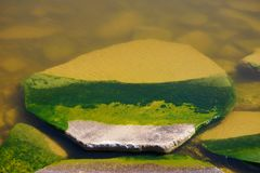 Grande pietra in acqua verde in acqua nordica della radura della natura di estate di giorno soleggiato dell'ombra Fondo verde fotografia stock