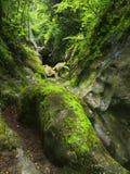 Grande pietra con muschio Fotografia Stock Libera da Diritti