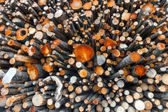 Grande pila di ceppi Fotografie Stock