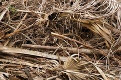 Grande pila di foglie e di ramoscelli secchi Fotografia Stock
