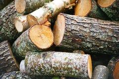 Grande pile de bois de chauffage Grande pile de bois de chauffage pour la cheminée troncs d'arbre sciés tremble rouge et bouleau, images libres de droits
