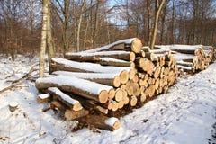 Grande pilha da lenha na floresta coberta com a neve fotos de stock