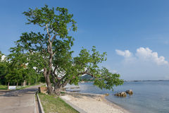 Grande plage de mer d'arbre Photo stock