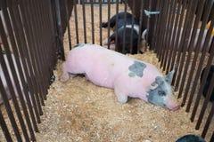 Grande porco cor-de-rosa que dorme em uma gaiola do metal fotografia de stock