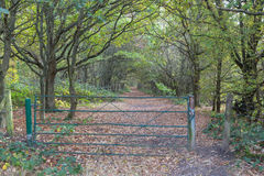 Grande porte menant à une promenade de forêt en automne Photographie stock libre de droits