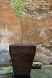 Grande potenciômetro com uma planta verde Imagem de Stock Royalty Free