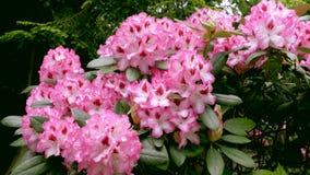 Grande primo piano dei fiori La macchina fotografica si spost indietroare sul cursore Correzione di colore archivi video