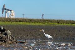 Grande pumpjack branco do egret, da poluição e da perfuração para a exploração do petróleo Fotografia de Stock Royalty Free