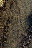 Grande quantidade de erva daninha da água imagem de stock royalty free