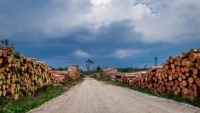 Grande quantidade de madeira cortada após um vendaval imagens de stock