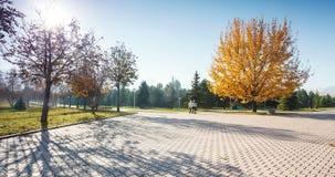 Grande quercia di autunno e nel parco di Almaty video d archivio
