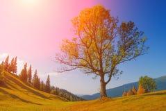 Grande quercia in una valle della montagna carpatica Immagini Stock Libere da Diritti