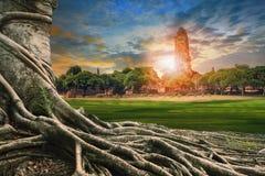 Grande radice dello scape della terra dell'albero di banyan della pagoda antica e vecchia dentro Fotografia Stock