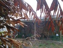 Grande ragnatela sulla palma Immagini Stock