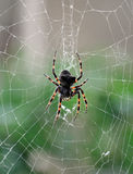 Grande ragno Fotografie Stock Libere da Diritti