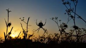 Grande ragno durante l'alba Fotografie Stock Libere da Diritti