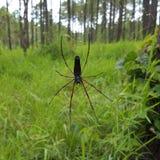 Grande ragno nero e rosso Immagine Stock Libera da Diritti