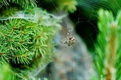 Grande ragno sul suo Web Immagine Stock Libera da Diritti
