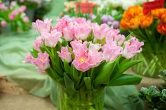 Grande ramalhete de tulipas cor-de-rosa delicadas foto de stock