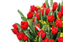 Grande ramalhete de tulipas vermelhas Imagens de Stock