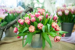Grande ramalhete de tulipas vermelhas cor-de-rosa delicadas em uma cubeta Cartão, olá! mola imagens de stock