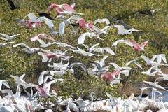 Grande rebanho da alimentação dos pássaros de água Fotos de Stock