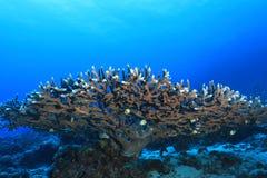 Grande recife de barreira fotografia de stock