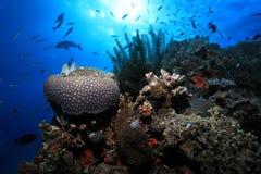 Grande recife de barreira imagens de stock royalty free