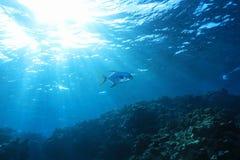 Grande recife de barreira foto de stock