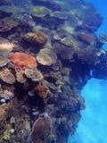 Grande recife de barreira Fotos de Stock Royalty Free