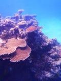 Grande recife de barreira Imagem de Stock