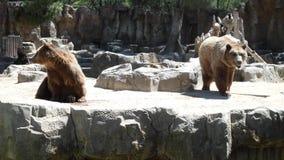 Grande recinzione degli orsi bruni immagine stock libera da diritti