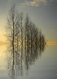 Grande reflexão das árvores Foto de Stock