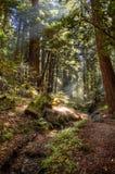 Grande regione selvaggia di Sur Ventana Fotografia Stock
