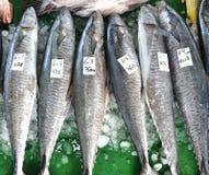 Grande rei Indo-pacífico Mackerels Foto de Stock Royalty Free