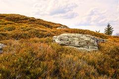 Grande roccia in mezzo ad un campo del ginepro Immagine Stock Libera da Diritti