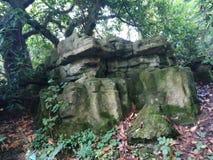 Grande roche dans Forrest Images libres de droits