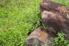 Grande roche sur l'herbe verte Images libres de droits