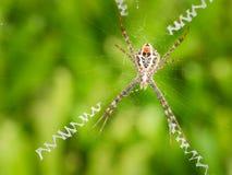 Grande rotação da aranha uma Web fotos de stock