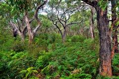 Grande route d'océan - parc national d'Otway de cap Images libres de droits