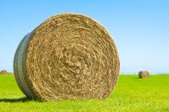 Grande rullo della balla di fieno in un campo verde Fotografia Stock