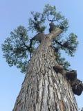 Grande árvore Fotos de Stock