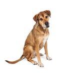 Grande séance mélangée semblante drôle de chien de race Image libre de droits