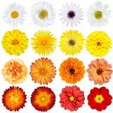 Grande sélection de diverses fleurs d'isolement Photo libre de droits