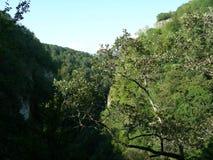 Grande scogliera densamente vegetata della montagna nella priorità alta Fotografie Stock