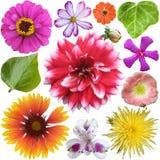 Grande selezione dei fiori variopinti Fotografie Stock Libere da Diritti