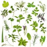 Grande selezione del foglio dell'erba Fotografia Stock