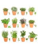 Grande selezione dell'erba in POT Fotografia Stock