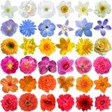 Grande selezione di vari fiori Fotografia Stock Libera da Diritti